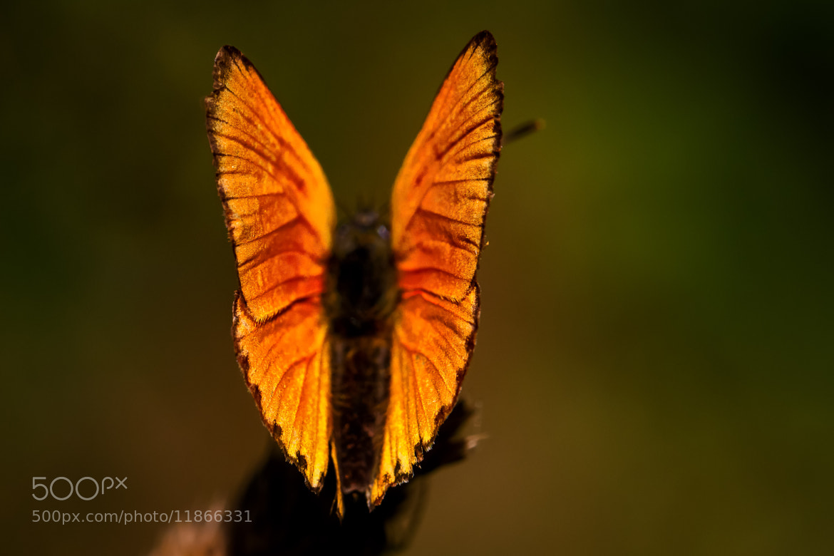 Photograph Fire on Wings by Thorsten Scheel on 500px