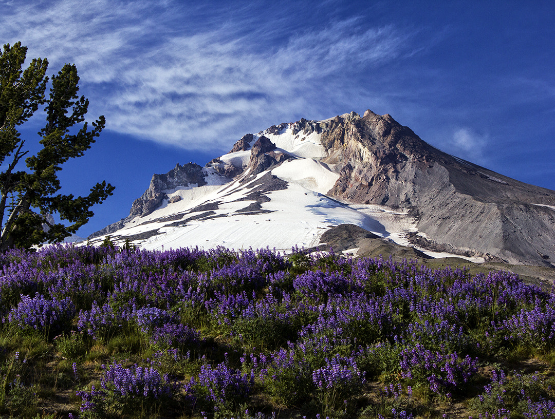 Photograph Mt. Hood by Cascadian on 500px