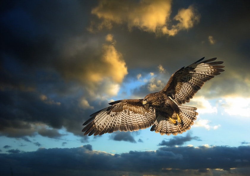 Photograph The Hunter by Dave Kitson on 500px