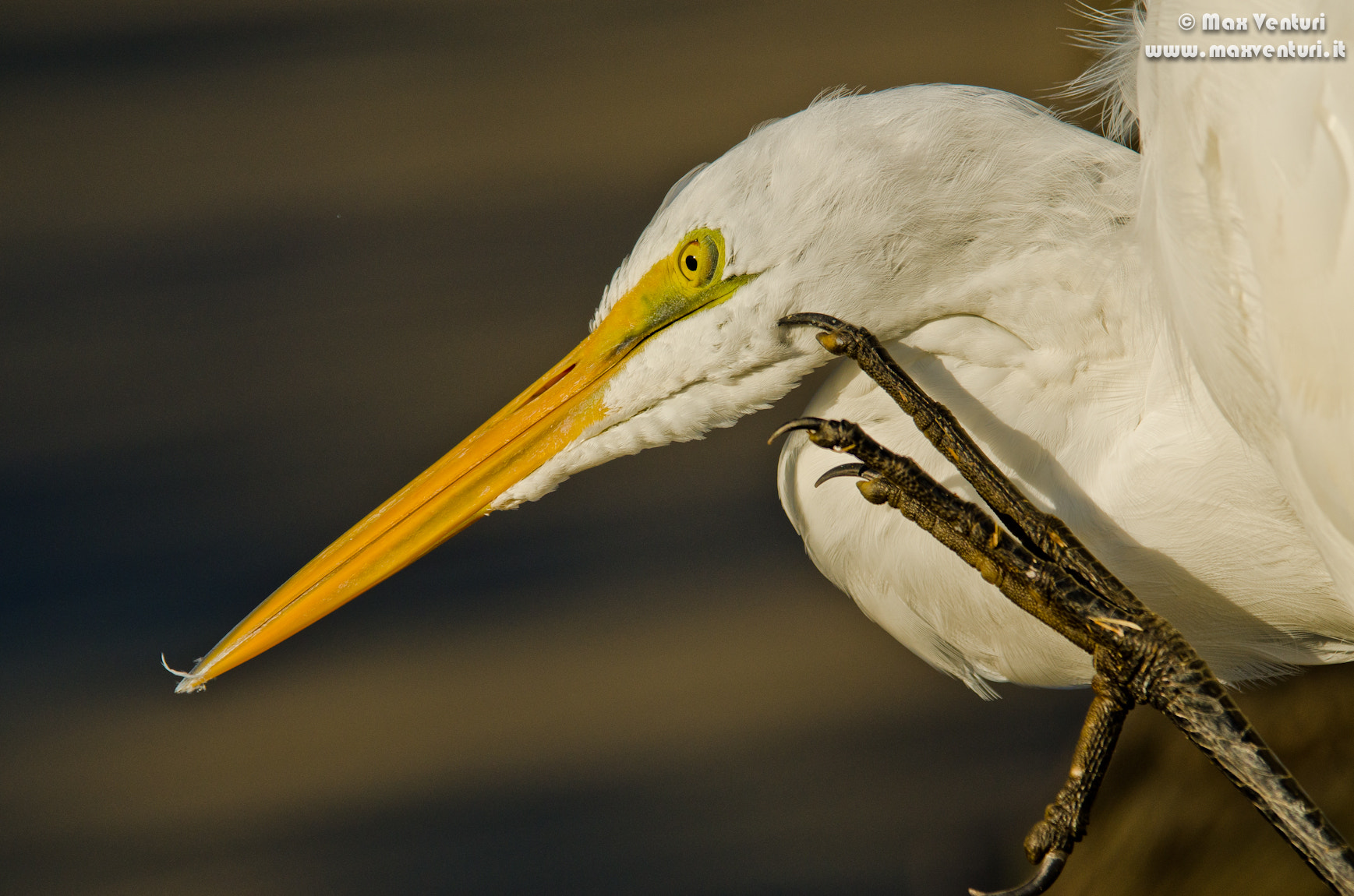 Photograph WHITE EGRET by Max Venturi on 500px