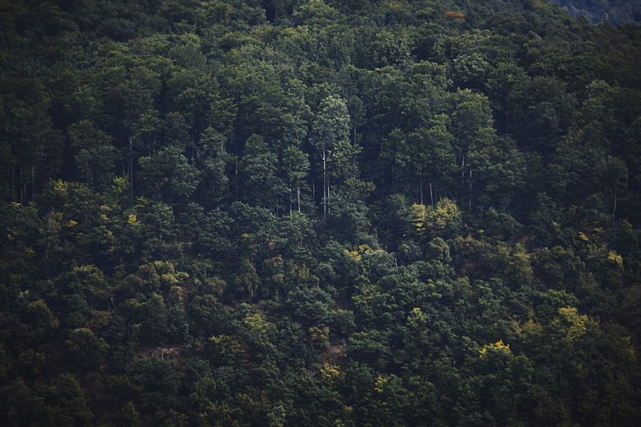 Forest in the Rhine Valley, Germany by Son of the Morning Light  on 500px.com
