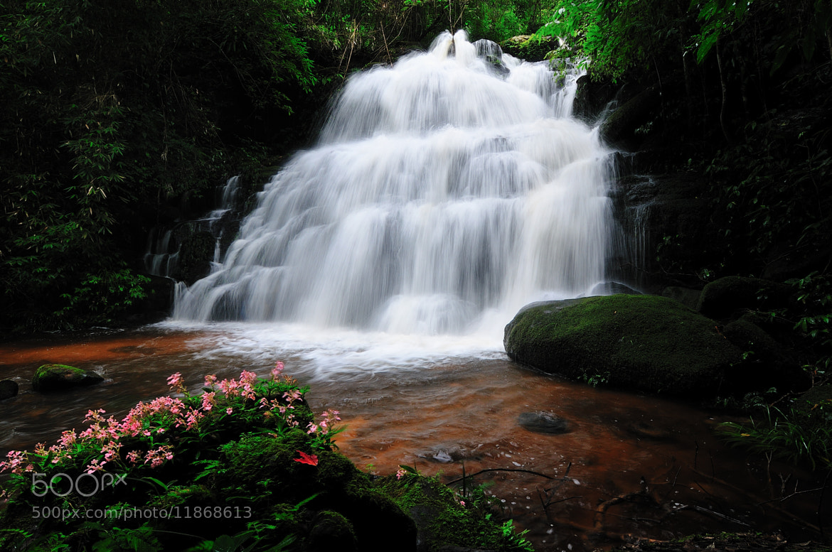 Photograph Deep Forest by Photos of Thailand .... on 500px