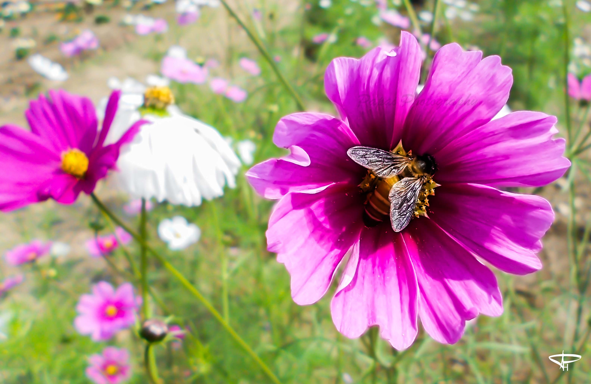 Photograph Flower & Bee by Papai Hati on 500px