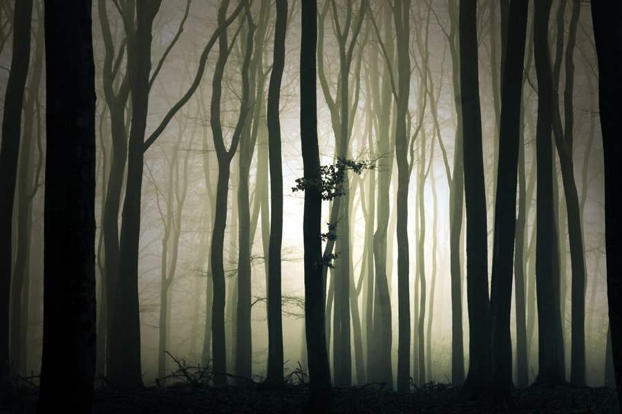 Photograph Mysterious light by Theo Peekstok on 500px