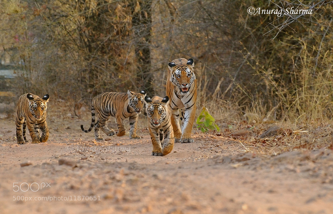 Photograph Baby's day out by anurag sharma on 500px