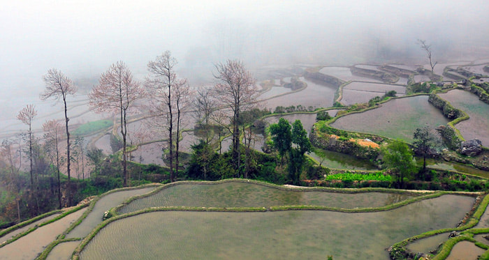 Photograph Foggy Rice Field by Yendie Limiardy on 500px