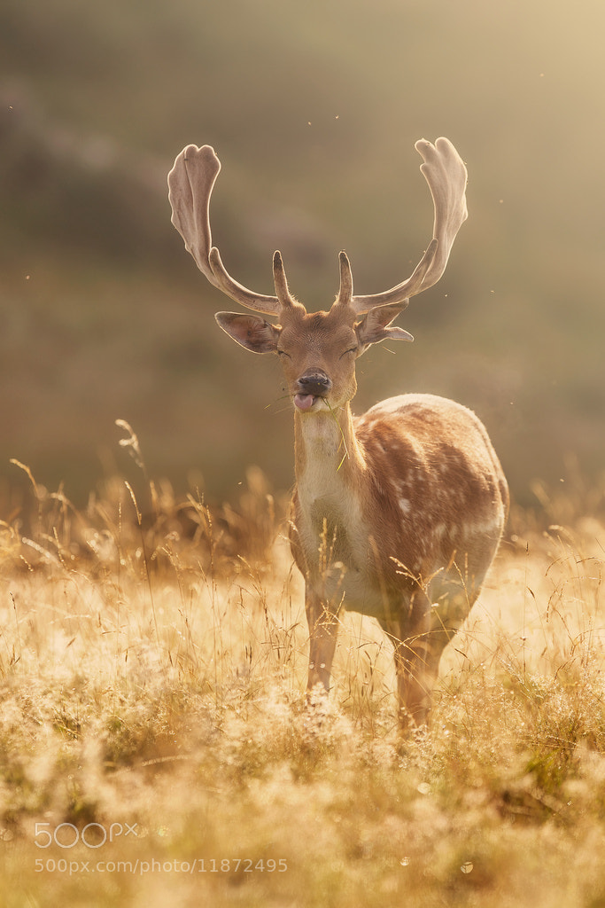 Photograph just blowing a raspberry by Mark Bridger on 500px
