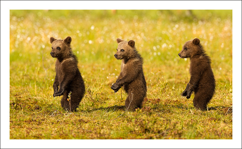 Photograph The three bears by Jules Cox on 500px