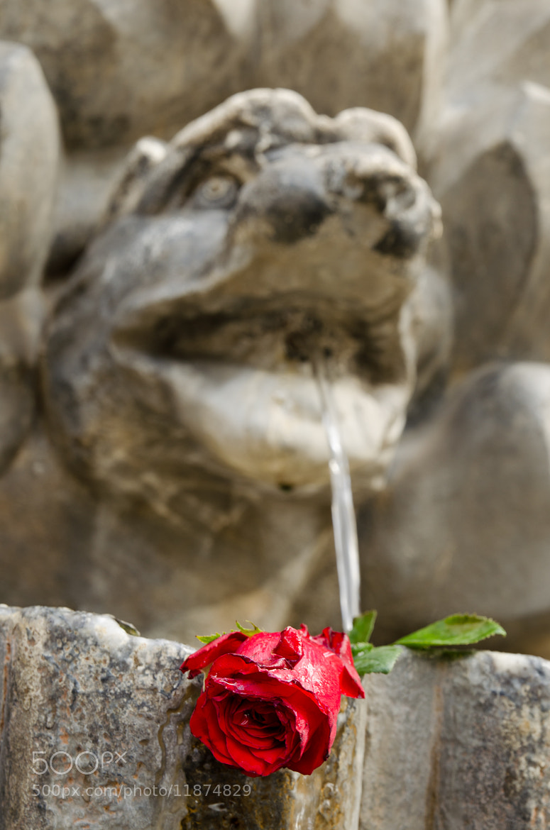 Photograph Rome, Italy, fontaine by Nicolas Courtade on 500px