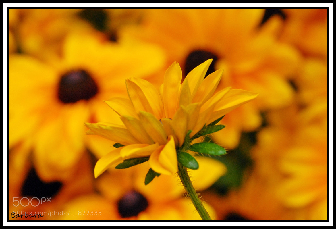 Photograph yellow by Mauro Scalvini on 500px