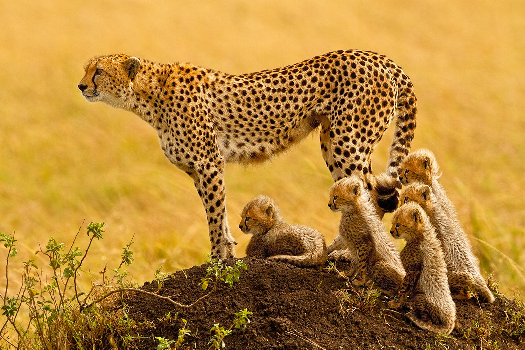Photograph The Matriarch by Stephen Oachs on 500px