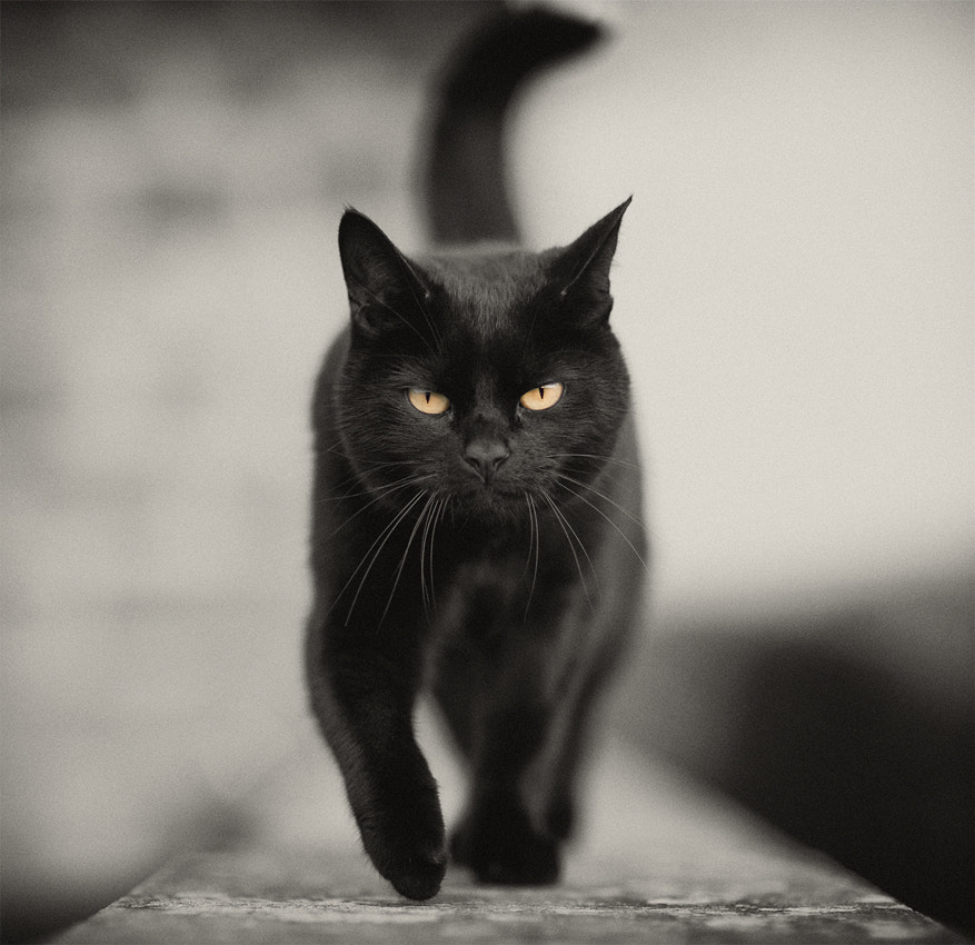 Photograph Cattitude by Hot Dog Photography on 500px