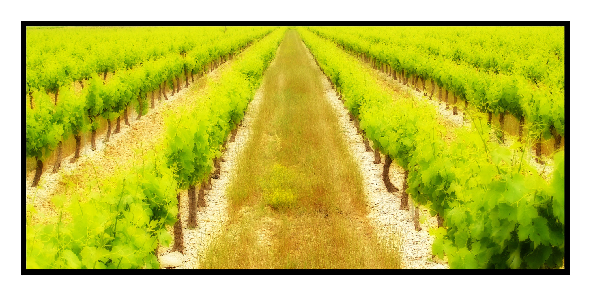 Photograph The Vineyard of your dreams! by Anthony Reed on 500px