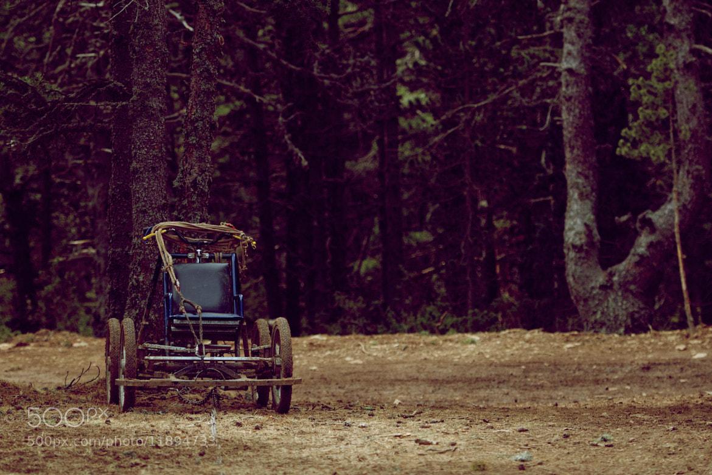 Photograph Untitled by Alexandra Maslova on 500px