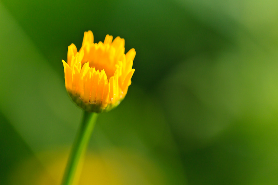 Photograph yellow green extrem by Marion Fanieng on 500px