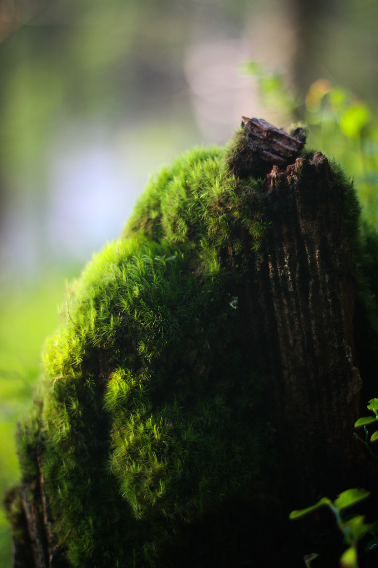 Photograph Moss me Down! by Christian Haugan on 500px