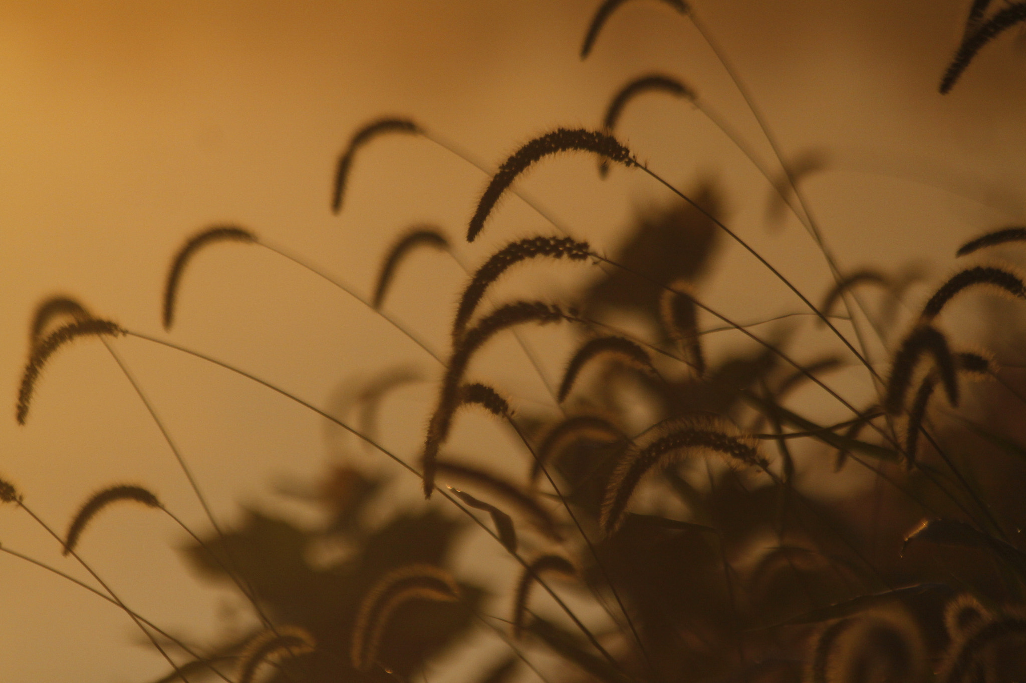 Photograph Weeds in the Summer Haze... by Palmer Allen on 500px