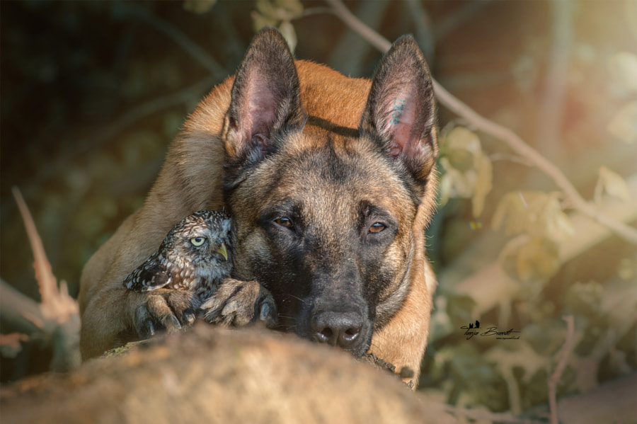 Seelen by Tanja Brandt on 500px.com