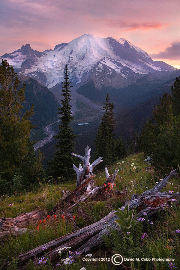 Photograph Summer Dreams by David Cobb on 500px