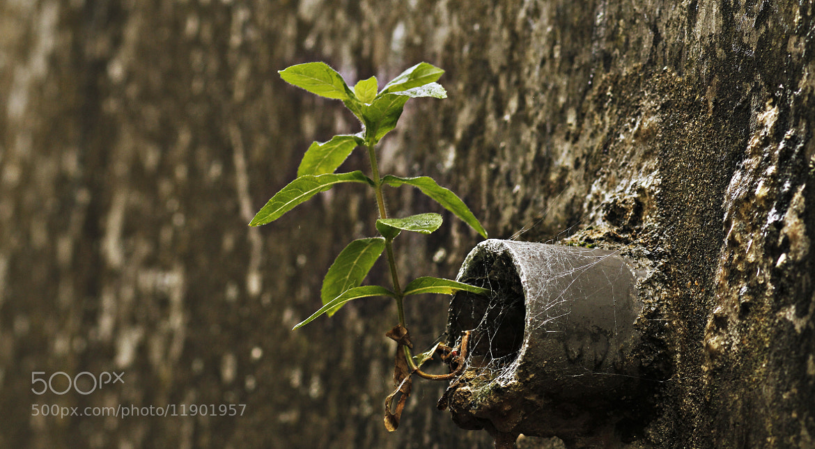 Photograph Life Will Find A Way by Robert K. Baggs on 500px