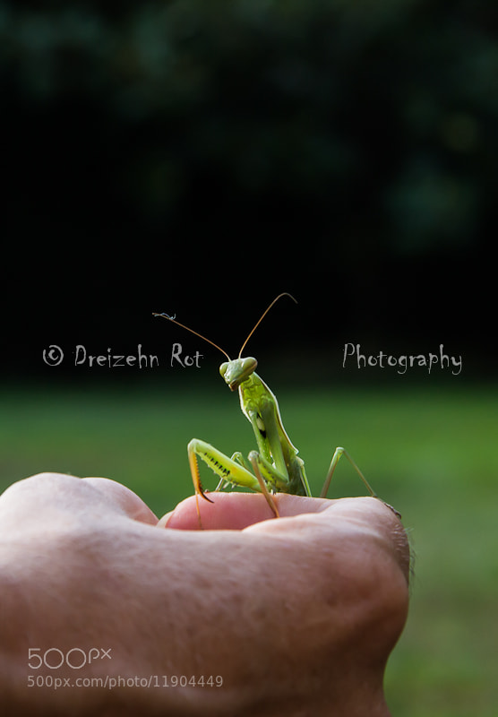 Photograph mantis... by emilio rubio on 500px