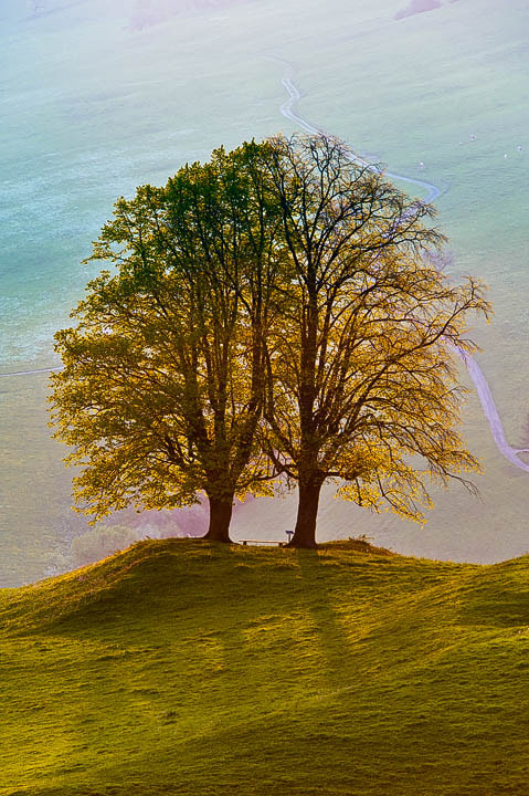 "Photograph Twin Trees by Roland ""Bill"" Moser on 500px"