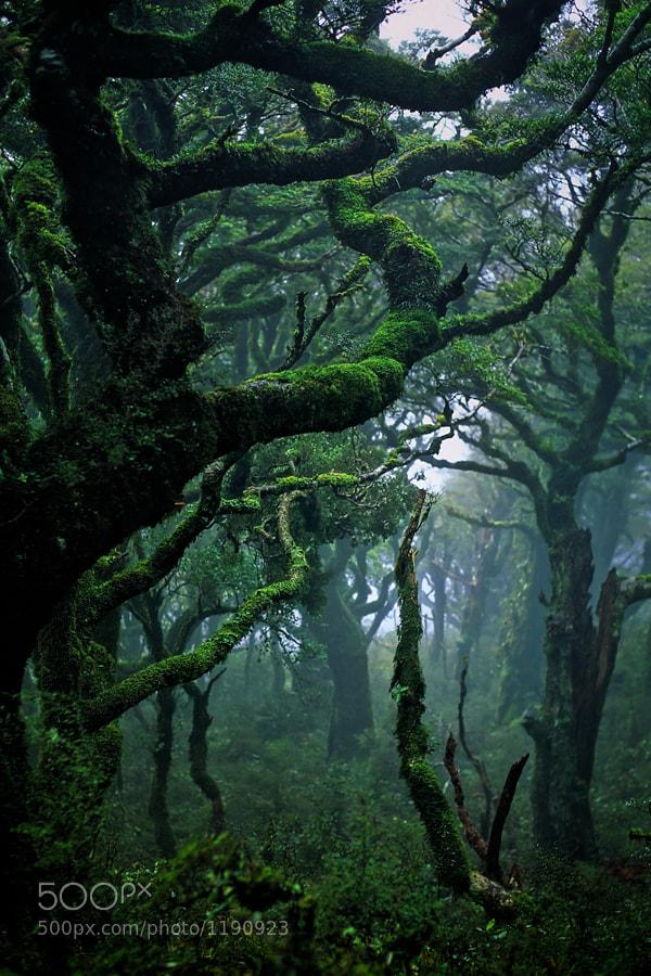 Photograph Waikaremoana by Bryan Larson on 500px