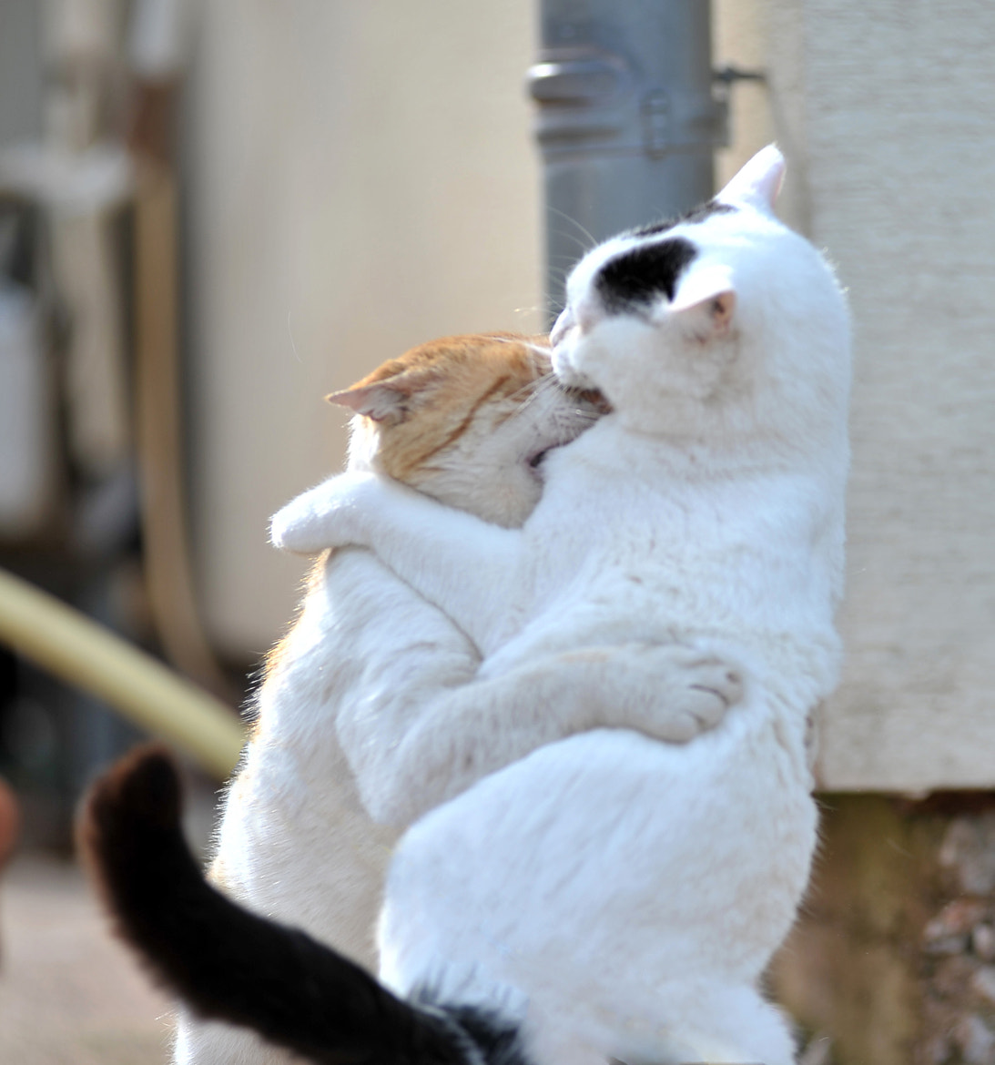 Photograph Hugs N' Kisses by Peter Comninellis on 500px