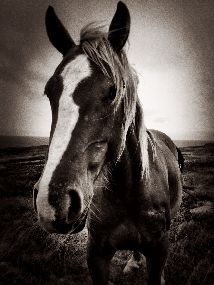 Photograph Horse on a windy cape by Tracy Munson on 500px