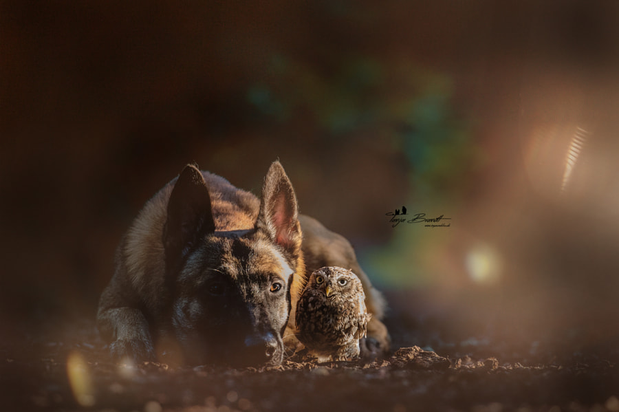 First daylight by Tanja Brandt on 500px.com