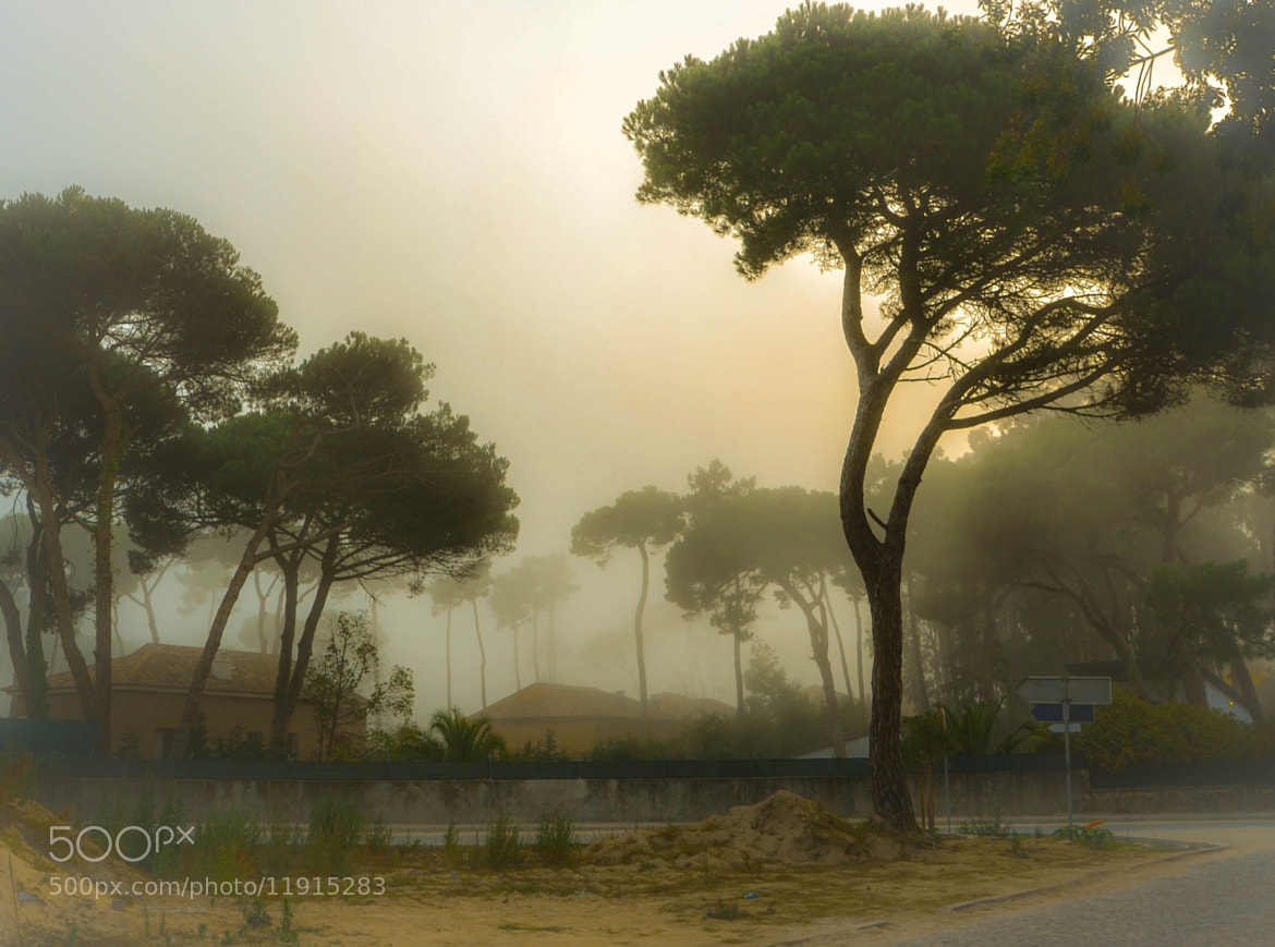 Photograph The fog will go away by Jorge Lume on 500px