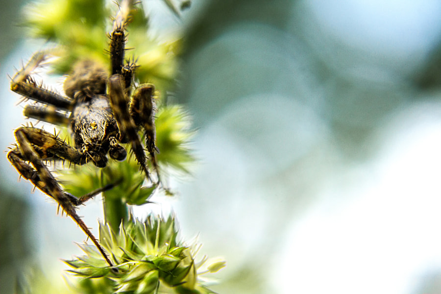 Spider in the Garden by Jeff Carter on 500px.com