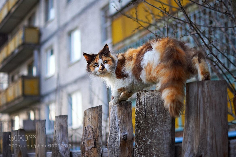Photograph Pirate by Alexander Vinogradov on 500px