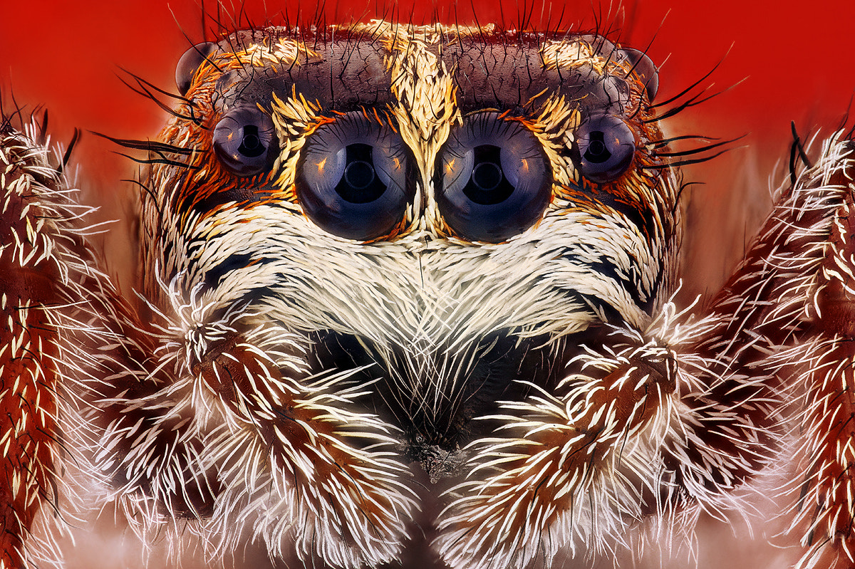 Photograph Spider by Dusan Beno on 500px