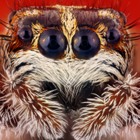 Spider by Kvejlend (Dusan Beno) (kvejlend)) on 500px.com