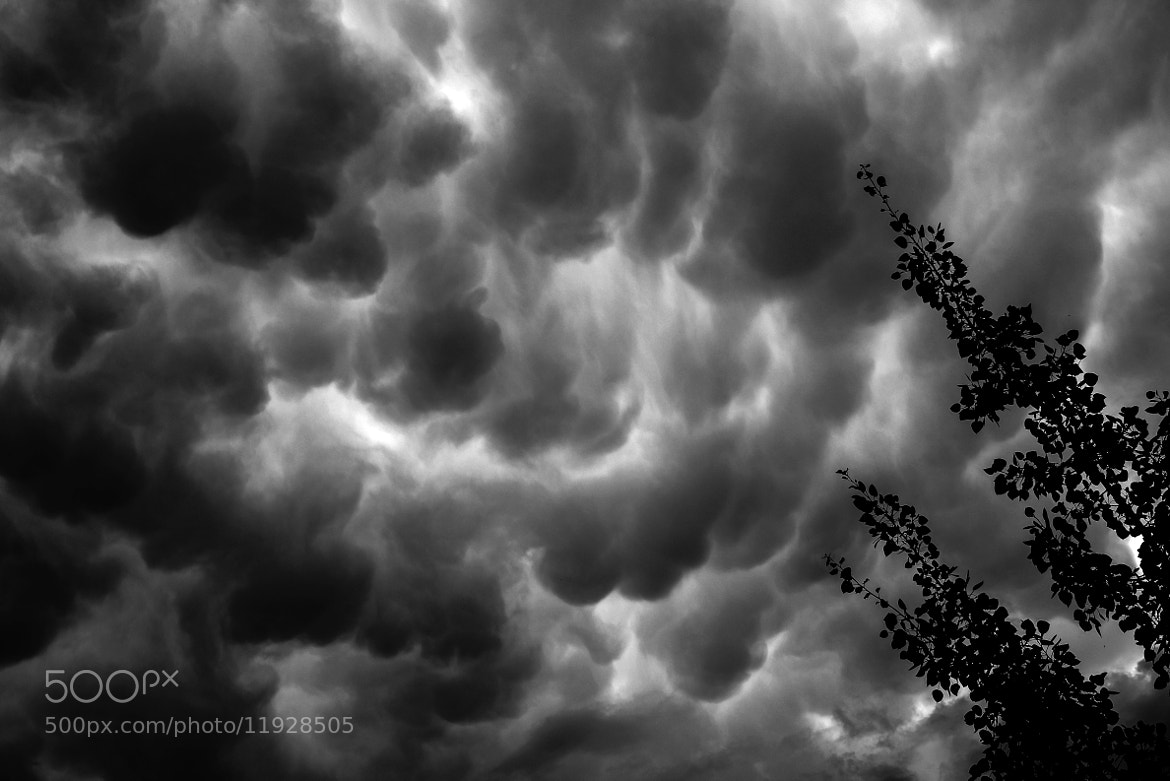 Photograph Something in the Air by Morten  Byskov on 500px