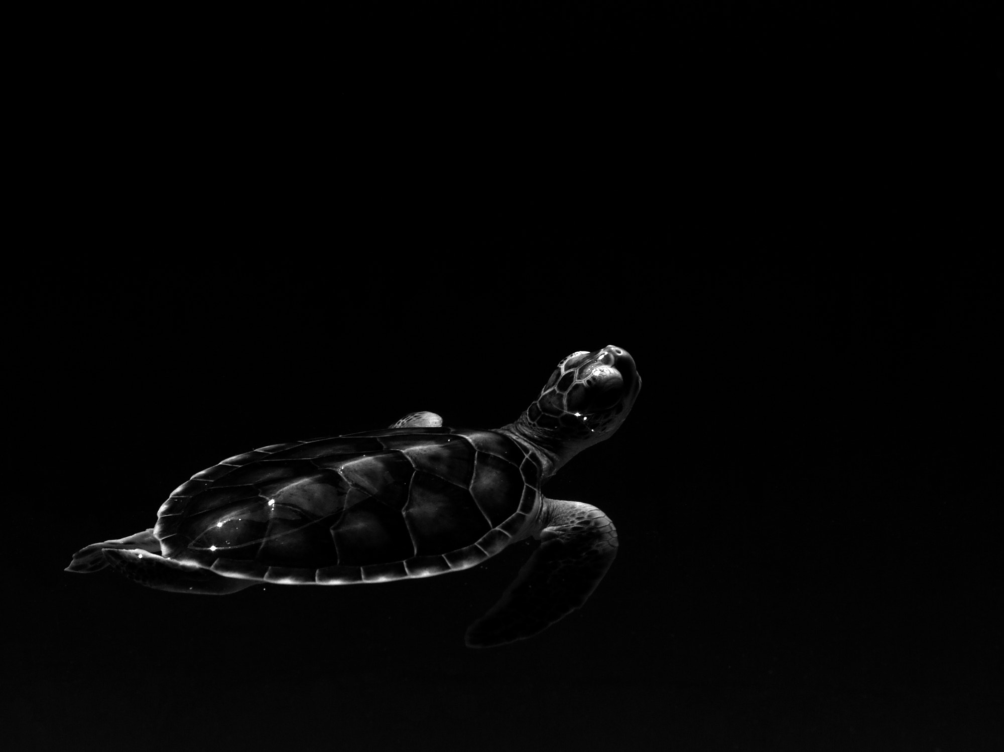 Photograph little turtle by Waratharn Puengkaew on 500px