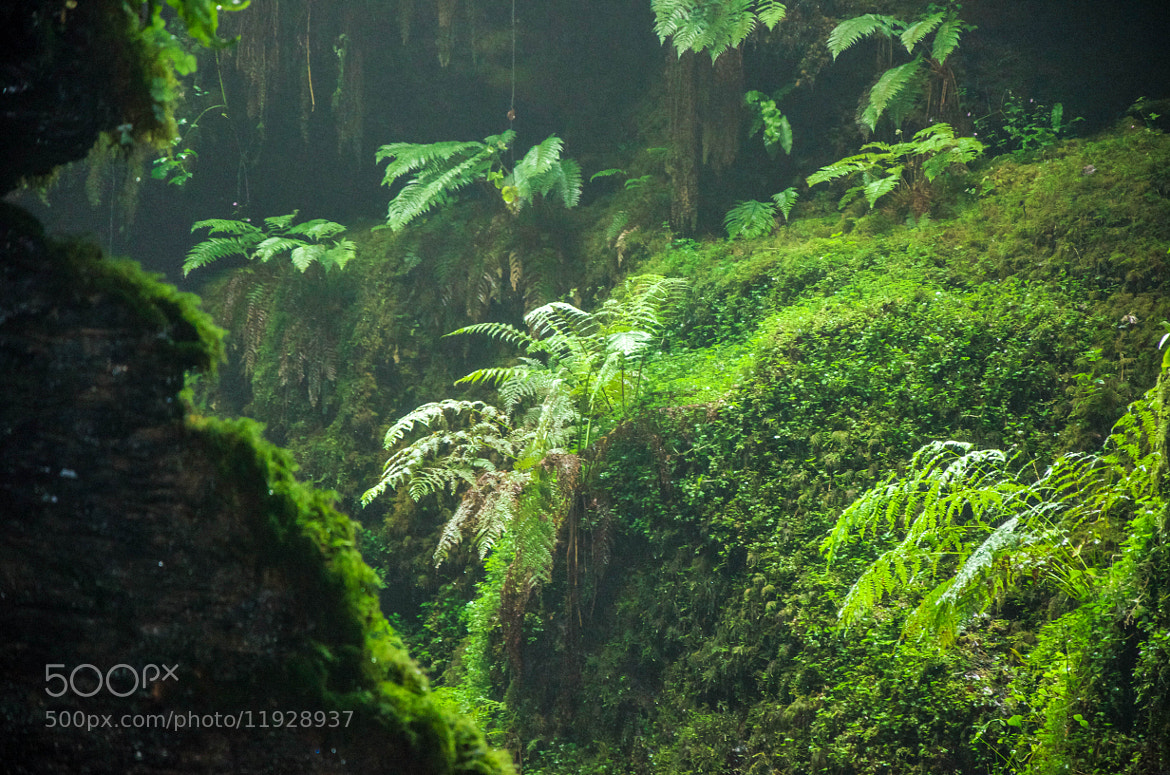 Photograph Jurassic? - Lydford Gorge by julian john on 500px