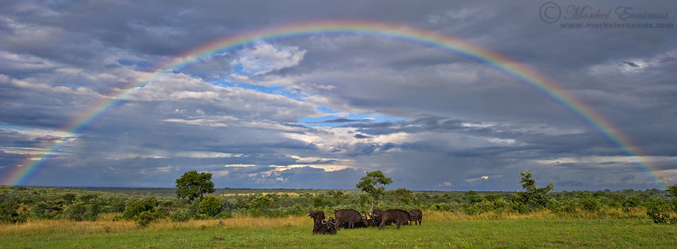 Photograph Welcome to Africa by Morkel Erasmus on 500px