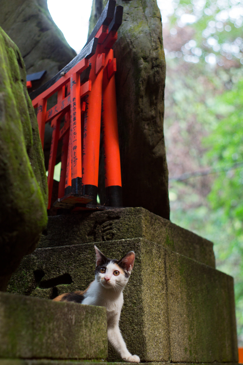Photograph Kitten in Inari Shrine by Clem Levin on 500px