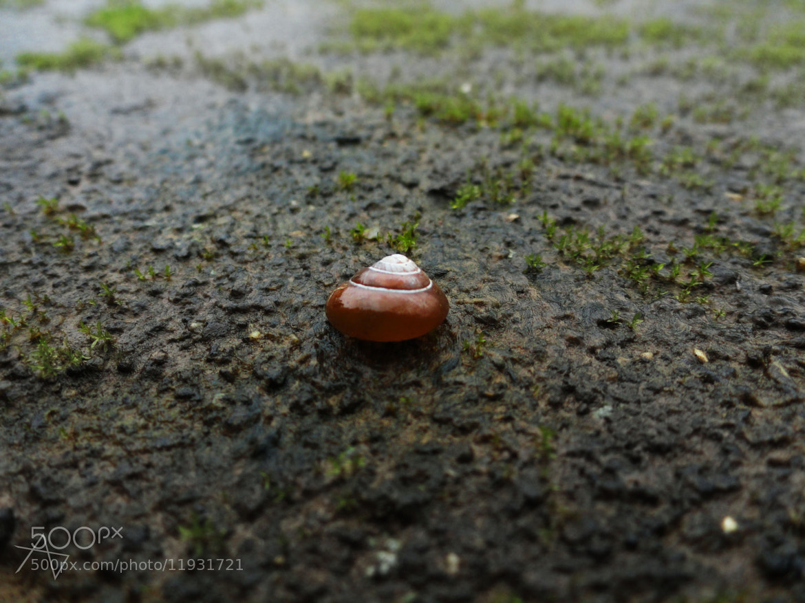 Photograph shell by ajinkya dixit on 500px