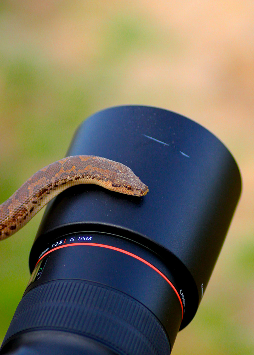 Photograph Lens for a snake by Munish Palaniappan on 500px