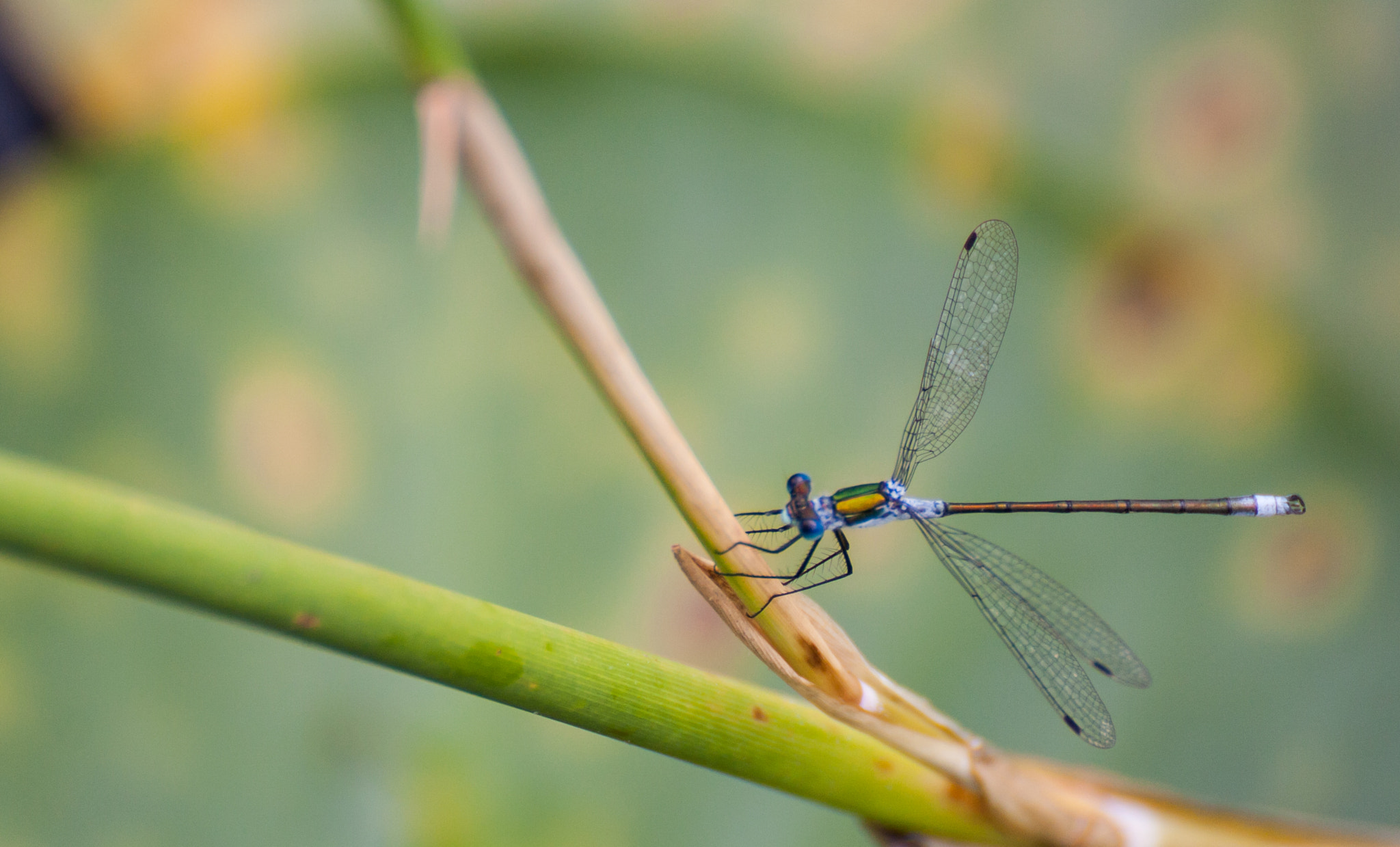 Photograph Dragonfly by Julian Wissmann on 500px
