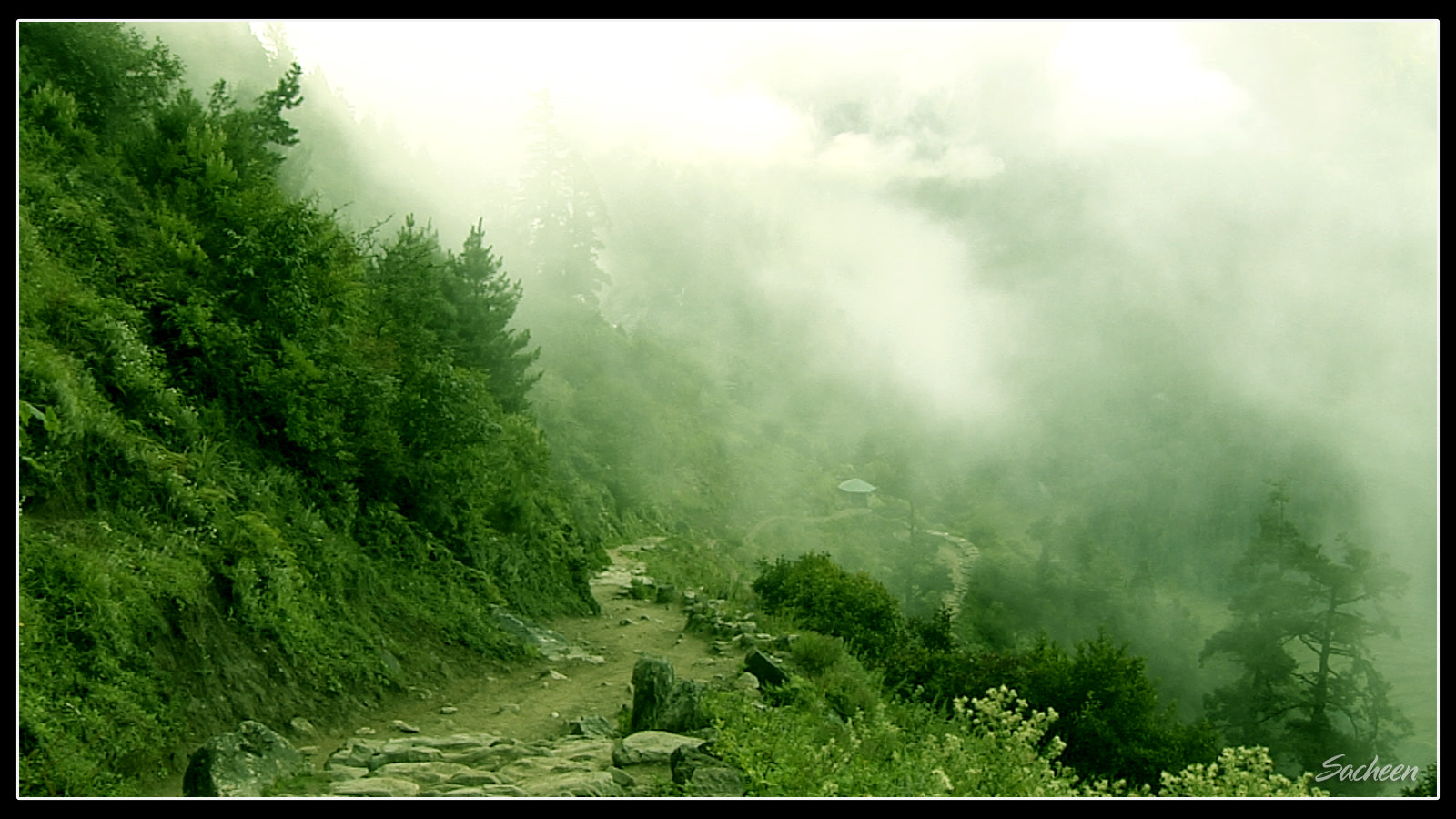 Photograph Forest way by Sacheen Vaidya on 500px