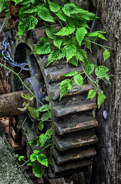Photograph Nature Reclaiming Industry by Mike Moats on 500px