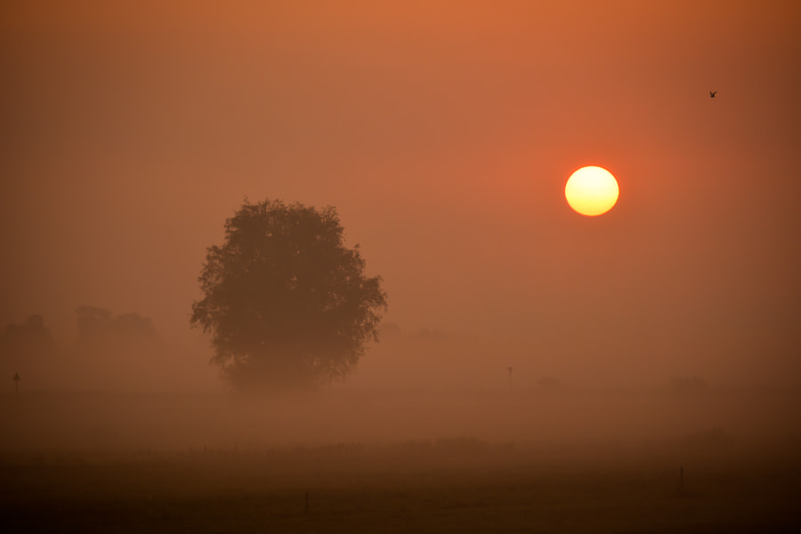 Lonely tree during a foggy sunrise