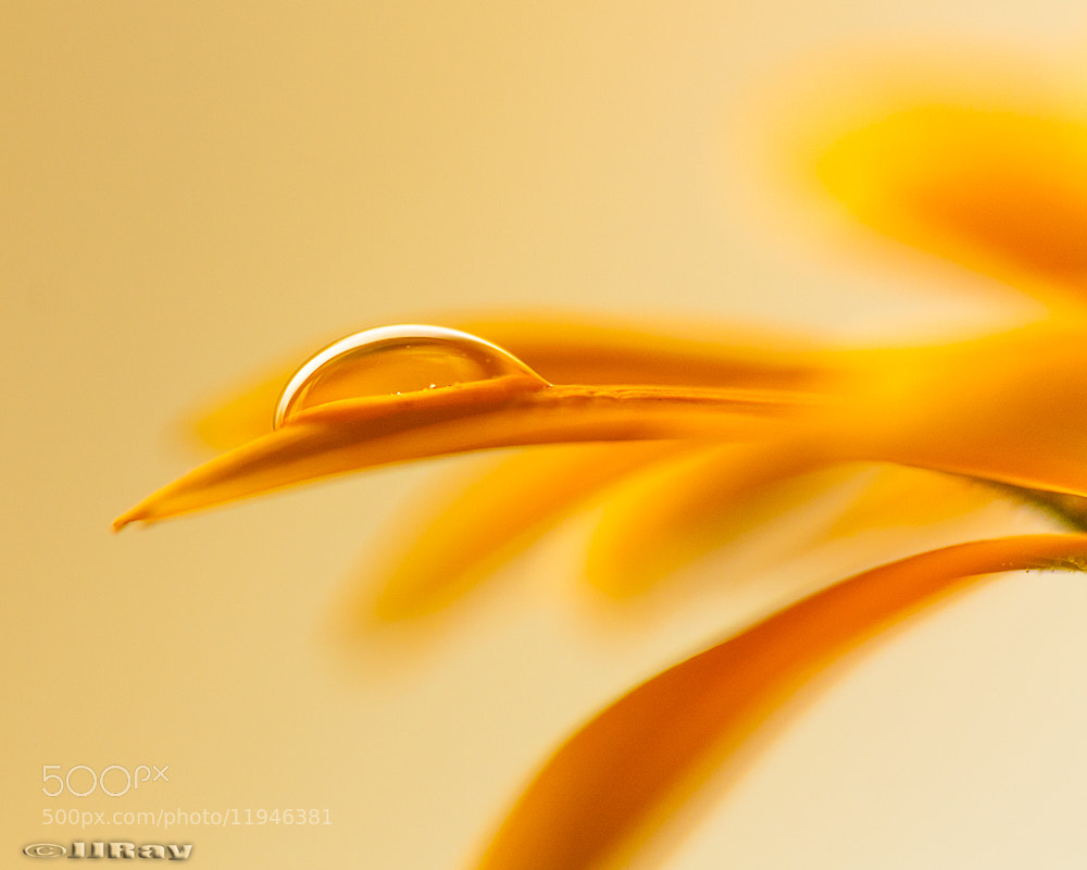 Photograph Orange Droplet by Jason Ray on 500px