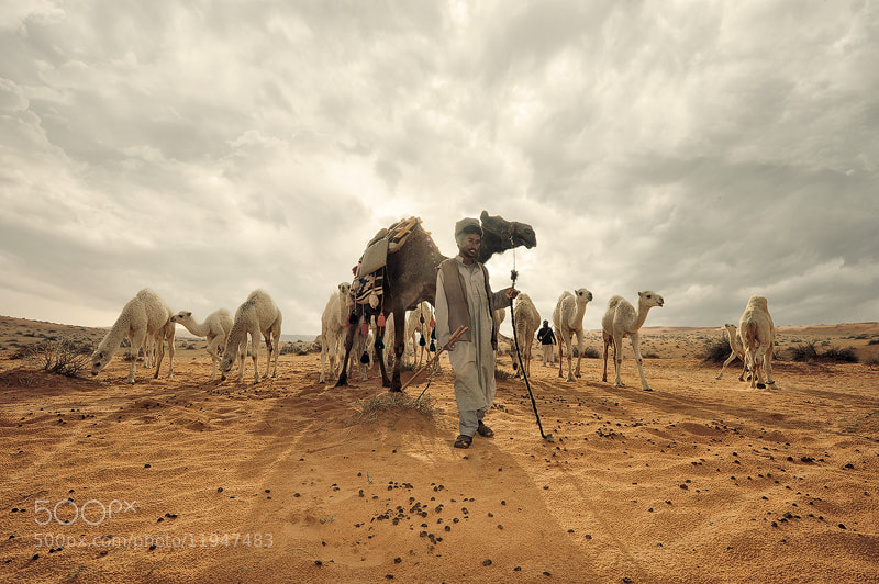 Photograph Ship of the desert 2 by Nasser  AlOthman on 500px