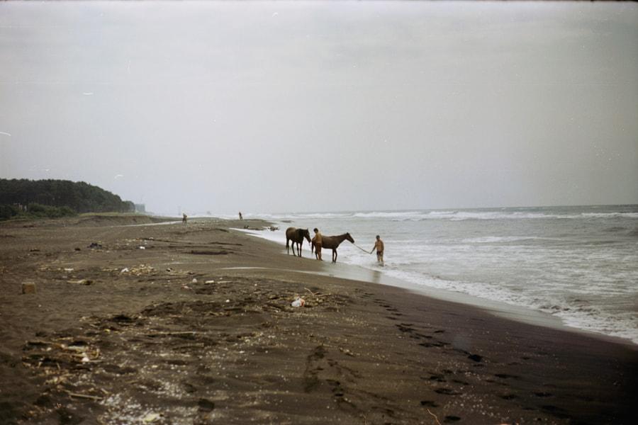 Bathing horses, автор — OrneLa Keenan на 500px.com