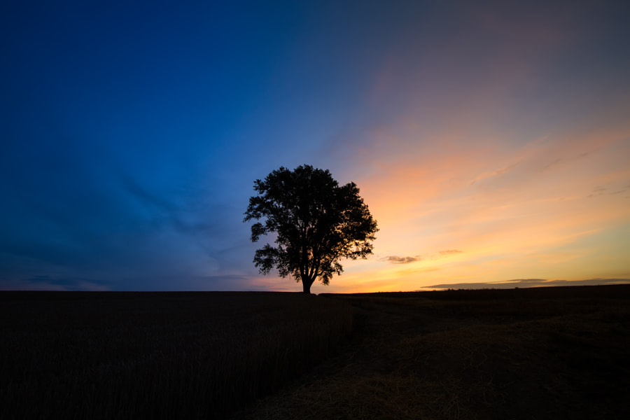 Isolation by Agustin Rafael Reyes on 500px.com